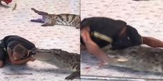 Relacionada cocodrilo muerde domador
