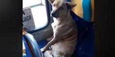 Relacionada perro chile