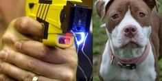Relacionada policia electrocuta pitbull