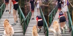 Relacionada perro due a gatea