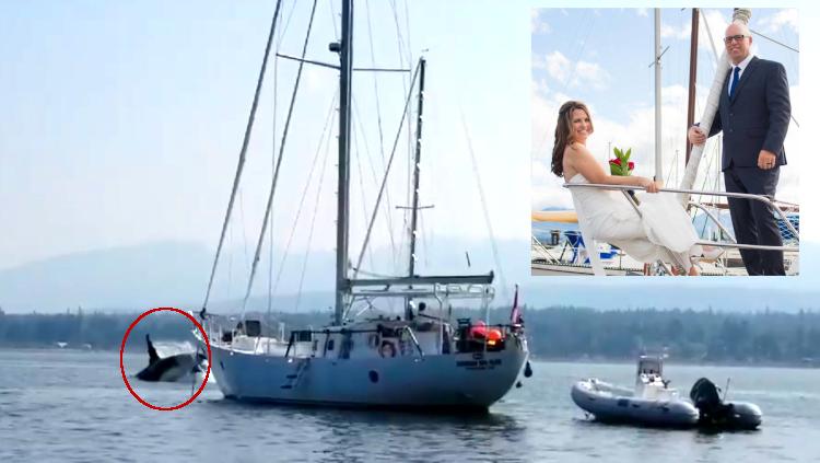Orca roba barco