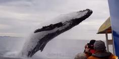 Relacionada ballena video