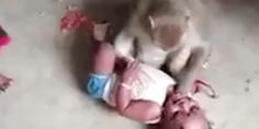 Relacionada mono bebe