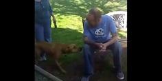 Relacionada re perro