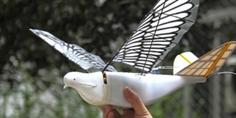Relacionada china palomas drones