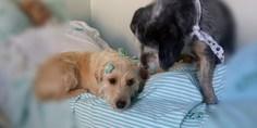 Relacionada conmueven perros que aguardan a su amo afuera de hospital