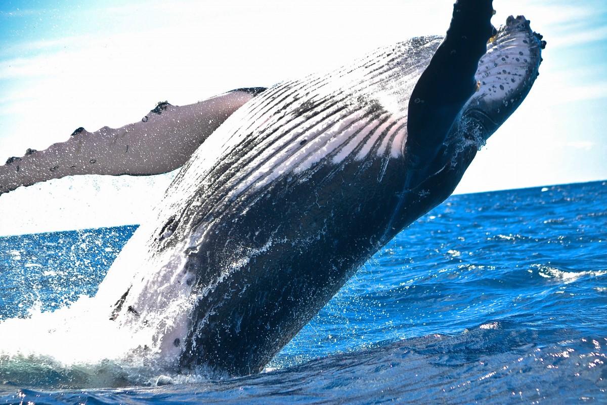 Una ballena volteó un barco con pescadores en Estados Unidos