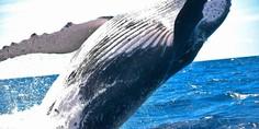 Relacionada ocean whale water splash fin 63183