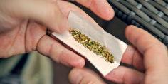 Relacionada marihuana