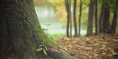Relacionada tree trunk 569275 640