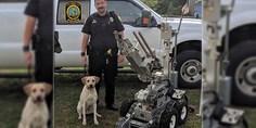 Relacionada perro policia carolina del sur
