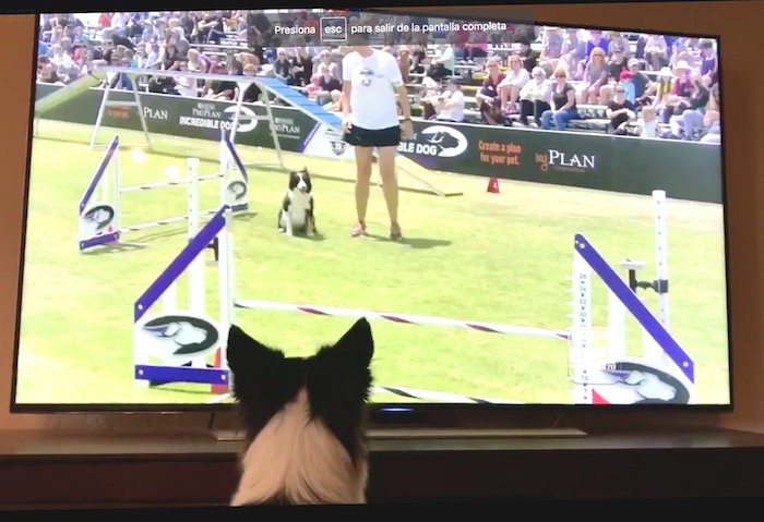 Perrita se emociona con video de ella misma