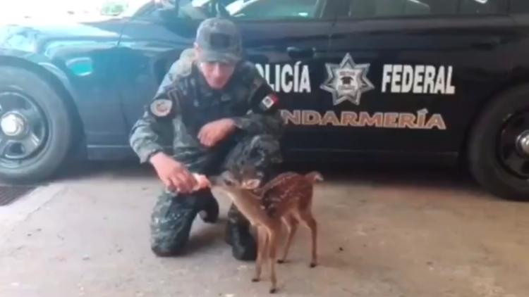 Bambi guerrero