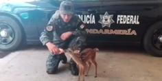 Relacionada bambi guerrero