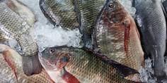 Relacionada pescados