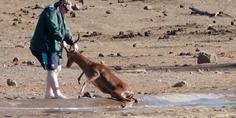 Relacionada salva impala