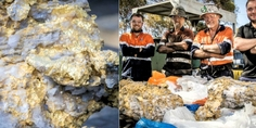 Relacionada oro australia 10 millones