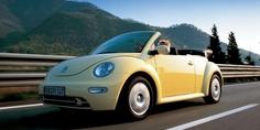 Relacionada beetle