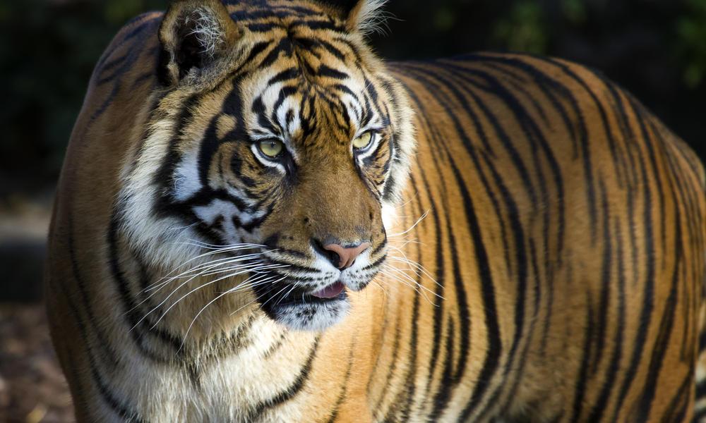 Un raro y hermoso animal muere de absurdo modo
