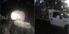 Relacionada tala clandestina chihuahua