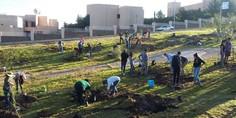 Relacionada plantan 2 500  rboles en el campus ii de la uach