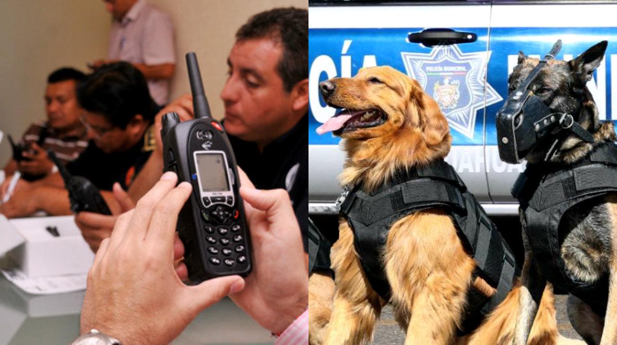 Radio y canes k9