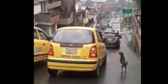 Relacionada perro ien