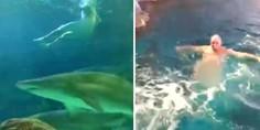 Relacionada 101618 man swims naked sharks web 59182792 ver1.0 640 360