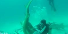 Relacionada pelea tiburon
