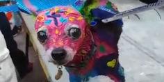 Relacionada perro 1.jpg 1619830263 ien
