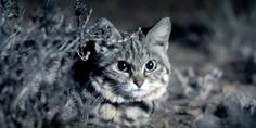 Relacionada deadliest cat