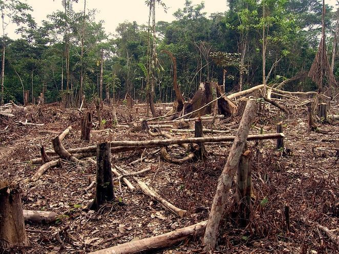 Deforestation in the amazon.jpg.662x0 q100 crop scale