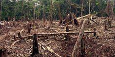 Relacionada deforestation in the amazon.jpg.662x0 q100 crop scale