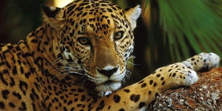 Galeria jaguar en calakmul mexico 1 45043226104 o