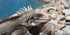 Relacionada reptile 1246666 640