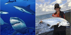 Relacionada tiburon sobrevivi  ataque tiburones