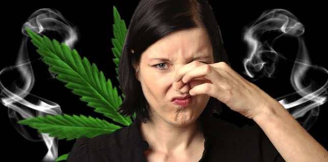 Olor marihuana