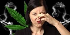 Relacionada olor marihuana