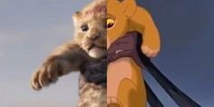 Relacionada leon