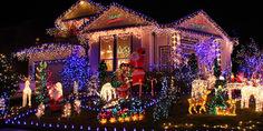 Relacionada lucens navida