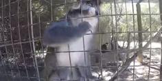 Relacionada mono