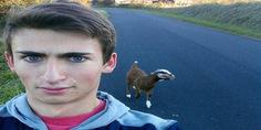 Relacionada cabra11
