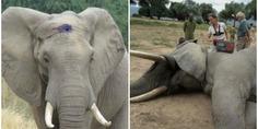 Relacionada elefante