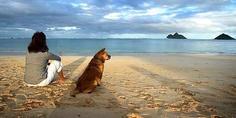 Relacionada playas para perros  644x362