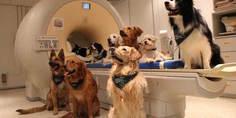 Relacionada perros en experimento