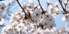 Relacionada ws purity flower 1920x1200