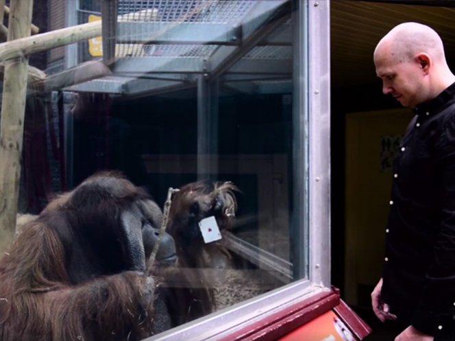 Mago hace truco de naipe con orangután