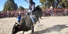 Relacionada feriatrucha rodeo03