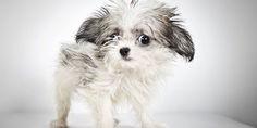 Relacionada richard phibbs perros