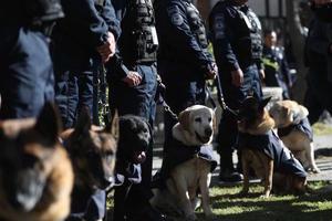 Slider seccion canina de la policia federal 38536596